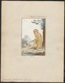Cercocebus fuliginosus - 1700-1880 - Print - Iconographia Zoologica - Special Collections University of Amsterdam - UBA01 IZ19900135.tif
