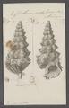Cerithium nodulosum - - Print - Iconographia Zoologica - Special Collections University of Amsterdam - UBAINV0274 083 05 0009.tif