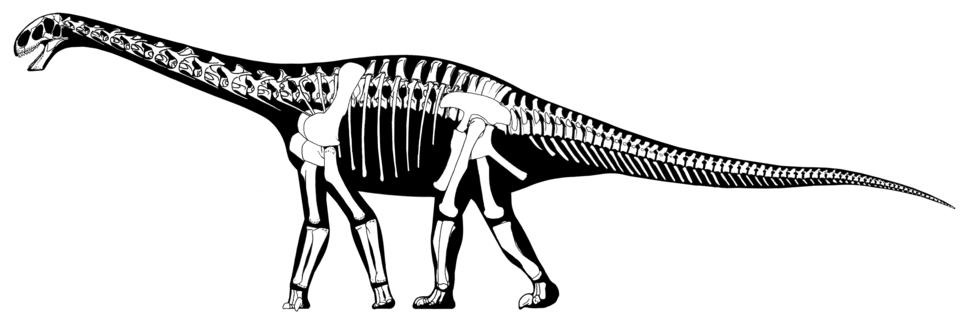 Cetiosaurus oxoniensis skeletal