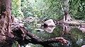 Chinnar River - panoramio (1).jpg
