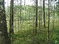 Chojnice, Poland - panoramio (23).jpg