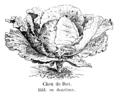Chou de Dax Vilmorin-Andrieux 1904.png