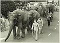 Circus, NL-HlmNHA 5400467138.JPG