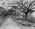 City Park New Orleans Benches Walkway Detroit Photographic.jpg