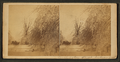 Clinton - carriages on Washington street and icy trees, after sleet storm, 1883, by F . O. Pease.png