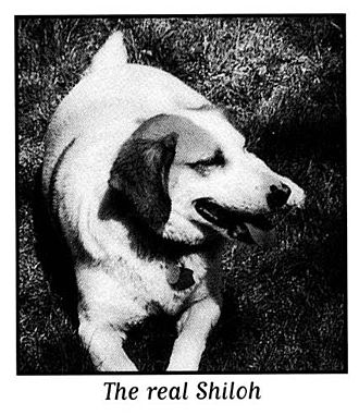 Shiloh (Naylor novel) - Clover, the mistreated beagle in West Virginia who inspired Naylor to write Shiloh