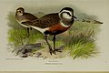 Coloured figures of the birds of the British Islands - issued by Lord Lilford (20290542862).jpg