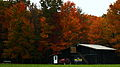 Country-farm-barn-tractor-chew-mail-pouch-fall-foliage-trees - West Virginia - ForestWander.jpg