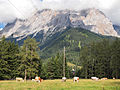Cows and Zugspitze.jpg