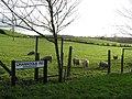 Crannogue Road, Donaghanie - geograph.org.uk - 294138.jpg