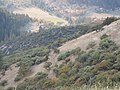 Cross country from Mule Mtn. trail to Mule Mtn. - panoramio.jpg