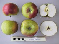 Cross section of Cistecke, National Fruit Collection (acc. 1974-202).jpg