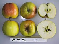 Cross section of Eaton 1, National Fruit Collection (acc. 1974-078).jpg