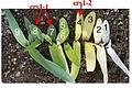Crs1 maize mutant.jpg