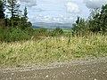 Crynant Forestry Walk - geograph.org.uk - 963668.jpg