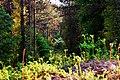 DSC 1545 Çatal meşe ormanı - panoramio.jpg