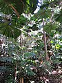 Daintree National Park, Queensland 10.jpg