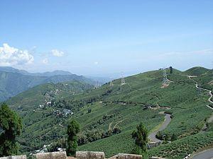 Darjeeling district - A tea garden in Darjeeling.