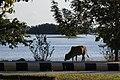 Dekkhina Thiri Township, Myanmar (Burma) - panoramio (5).jpg