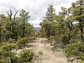 Derrick Trail, Payson, Arizona - panoramio (5).jpg