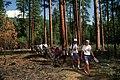 Deschutes National Forest, OMSI field trip, Metolius Basin (37048504531).jpg