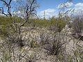 Desert 3 (15933202222).jpg