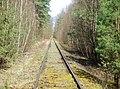 Dessau-Wörlitzer Eisenbahn im Biosphärenreservat Mittlere Elbe bei Oranienbaum-Wörlitz - panoramio (2).jpg