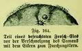 Die Frau als Hausärztin (1911) 164 Teil eines befruchteten Frosch-Eies.png