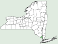 Digitaria ciliaris NY-dist-map.png
