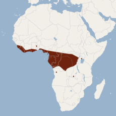 Distribution of Megaloglossus woermanni.png