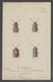 Diversen - Print - Iconographia Zoologica - Special Collections University of Amsterdam - UBAINV0274 016 03 0015.tif