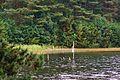 Dlugie Lake, Wesiory.JPG