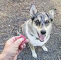 Dog clicker training.jpg