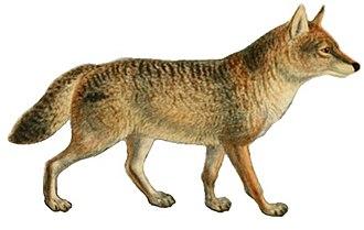 Italian wolf - 50 px