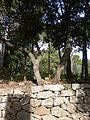 Domaine des Treilles (Var) 28.JPG
