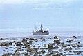 Dongosaro AKK Reef Flats.jpg