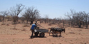 Mwenezi District - A donkey cart along the gravel roads that service the district. Most people in Mwenezi rely on donkey carts for transport.