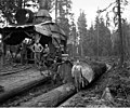 Donkey engine and crew, Lester Logging Company, near Montesano, ca 1915 (KINSEY 1963).jpeg