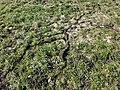 Dornbirn-disapered field mouses passages-08ASD.jpg