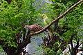 Dove&parrot.jpg