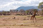 Ruaha-Nationalpark