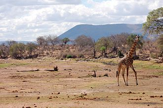 Water supply and sanitation in Tanzania - The dry Great Ruaha River in 2006 illustrates the scarcity of water during the dry season in parts of Tanzania