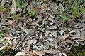 Dry gum leaf texture background porongurups.jpg