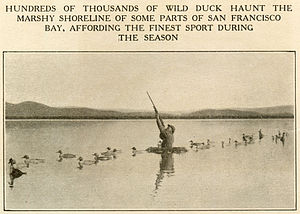 San Francisco Bay - Duck hunting on the Bay, 1915