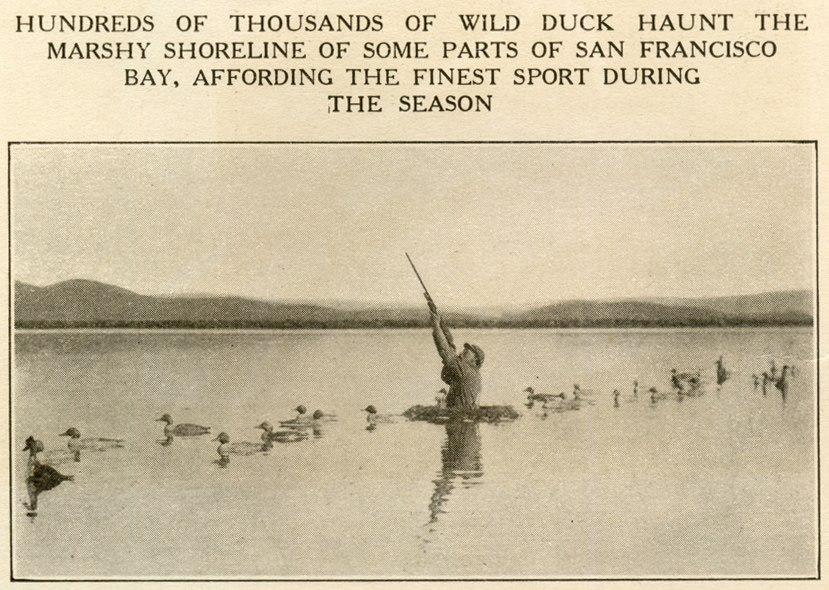 Duck Hunt Marshy Shoreline San Francisco Bay Alameda County california