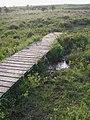 Duckboard walkway across Linwood Bog, New Forest - geograph.org.uk - 187146.jpg
