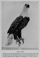 Eagle BSNH 1930.png