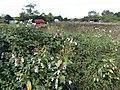Edge of Wetley Moor - geograph.org.uk - 532038.jpg