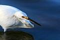 Egret-10.jpg