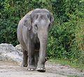 Elefant Tierpark Hellabrunn-6.jpg